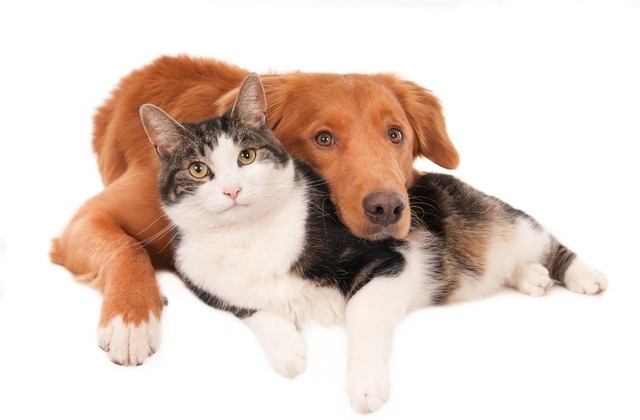 dog-and-cat-640×420